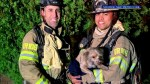 Firefighters in California bring dog back to life after house fire